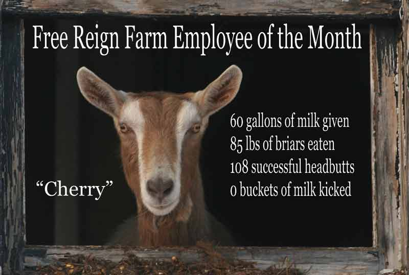 Prairie Daughters Goat